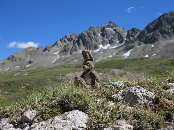 Alpine-Finse